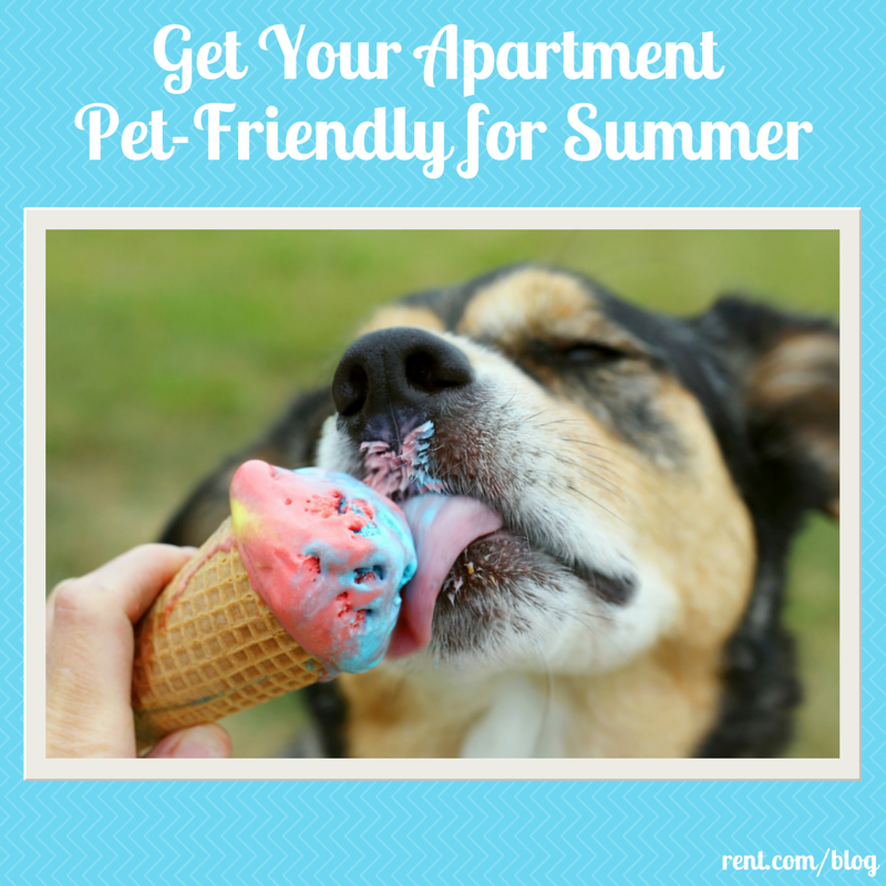 Making Your Apartment Pet-Friendly for Summer