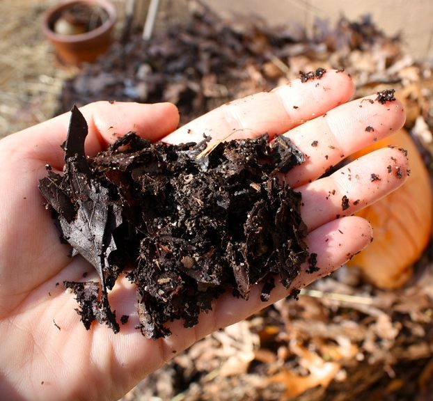 How to Compost in Your Apartment - Completed Compost