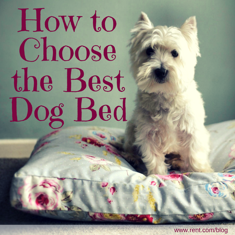 How to Choose the Best Dog Bed for Your Pup