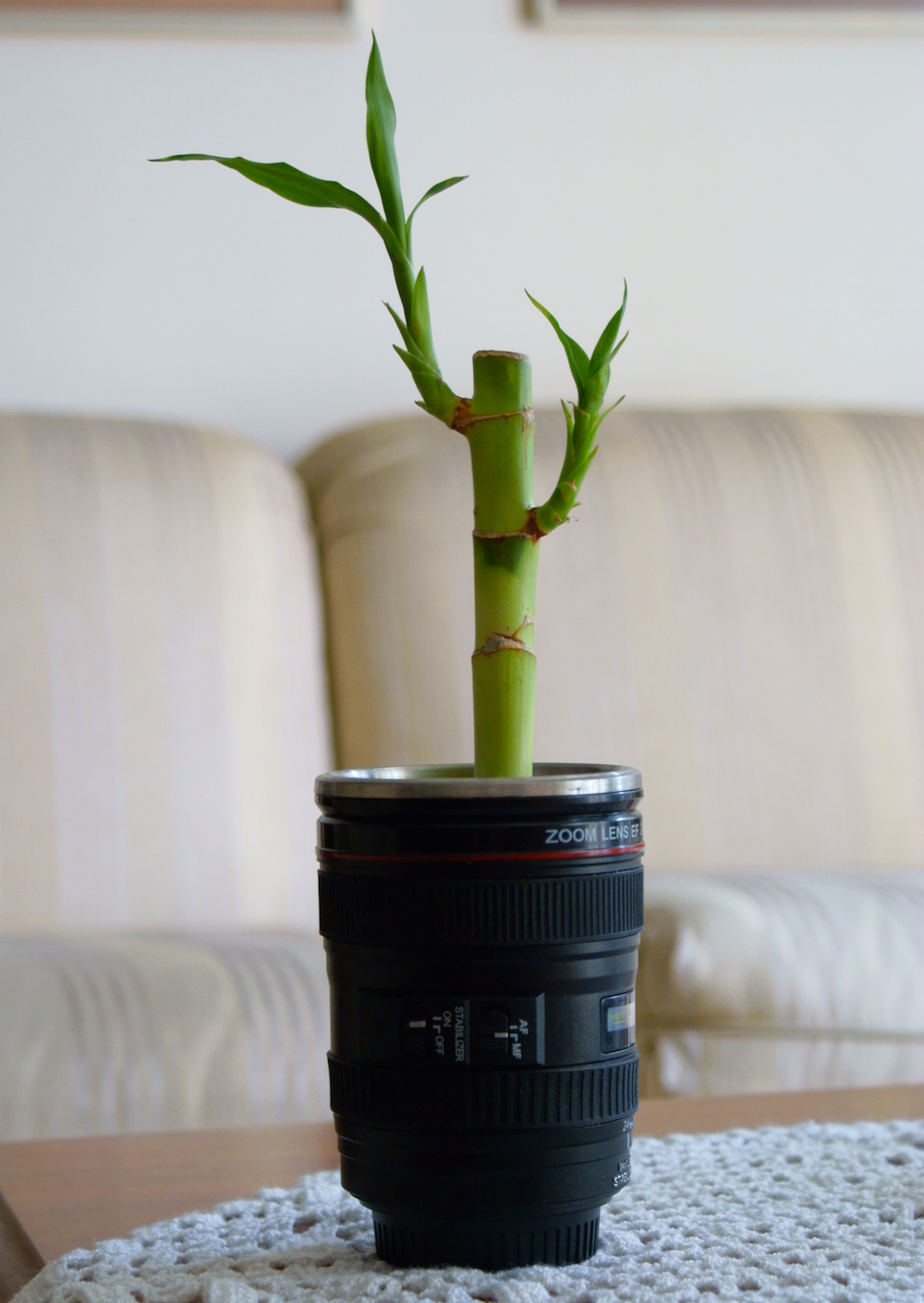 These Hard-to-Kill Plants Let You Go Green Without a Green Thumb - Lucky Bamboo
