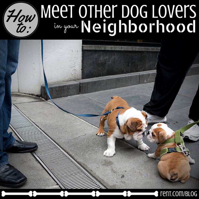 How to Meet Other Dog Lovers in Your Neighborhood