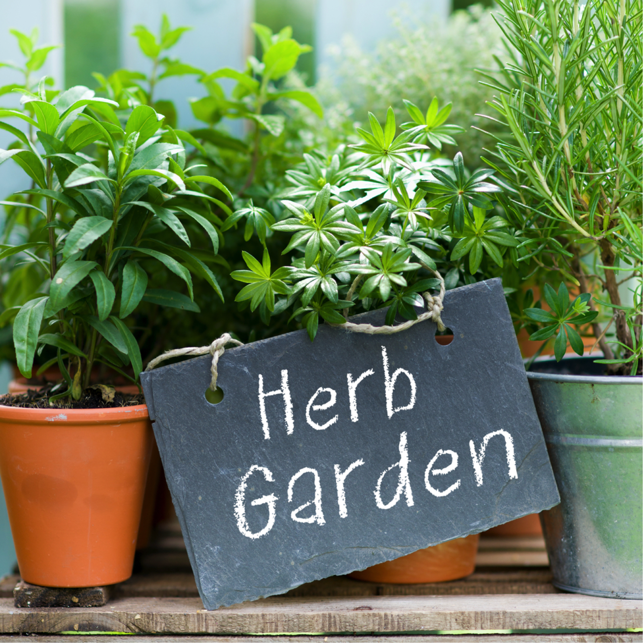 Save Money on Groceries by Apartment Gardening -Decide What You Want