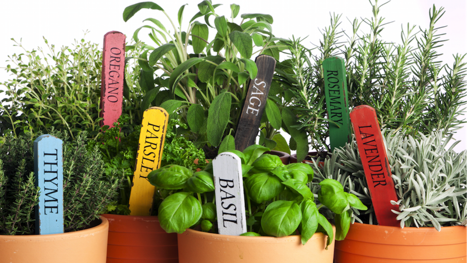 Save Money on Groceries by Apartment Gardening Rentcom Blog