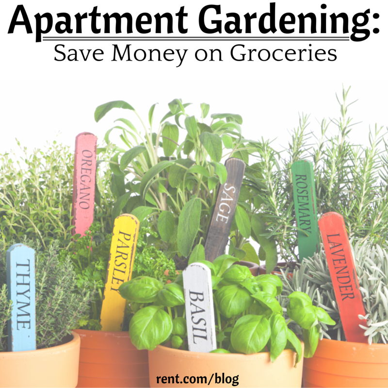 Save money on Groceries by Apartment Gardening -It's easier than you think!png