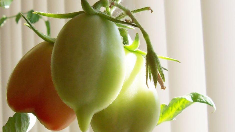 How To Grow An Indoor Vegetable Garden Blog