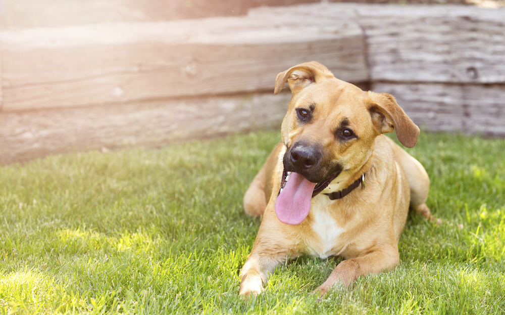 Moving Tips for Dog Owners - Before the Move