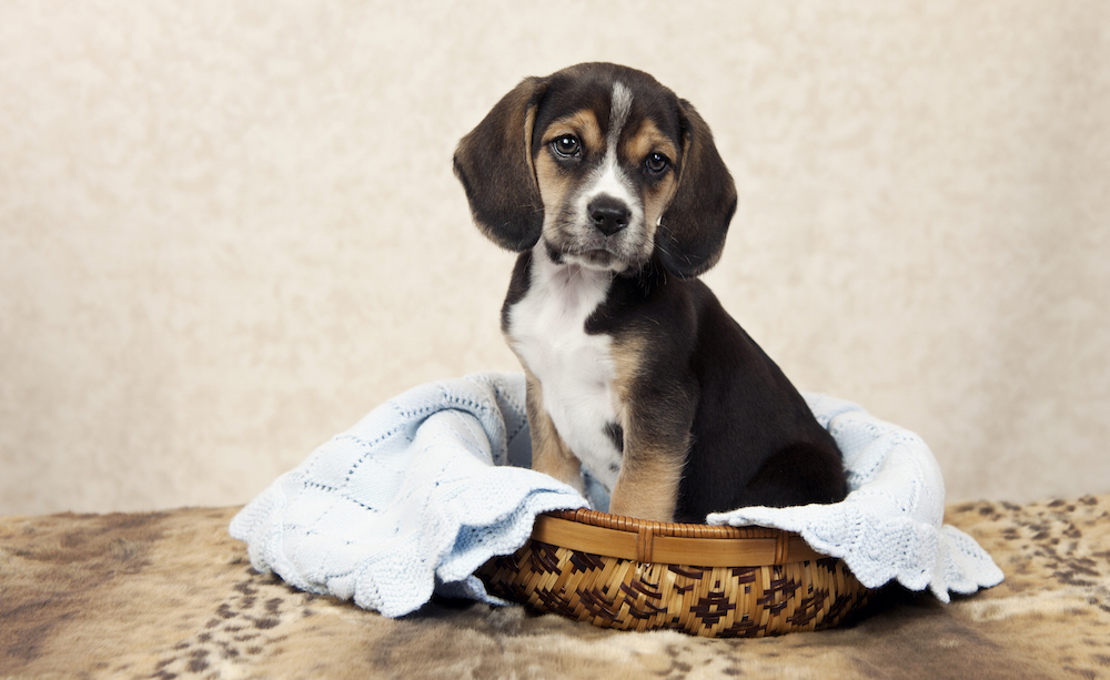 Moving Tips for Dog Owners - During the Move