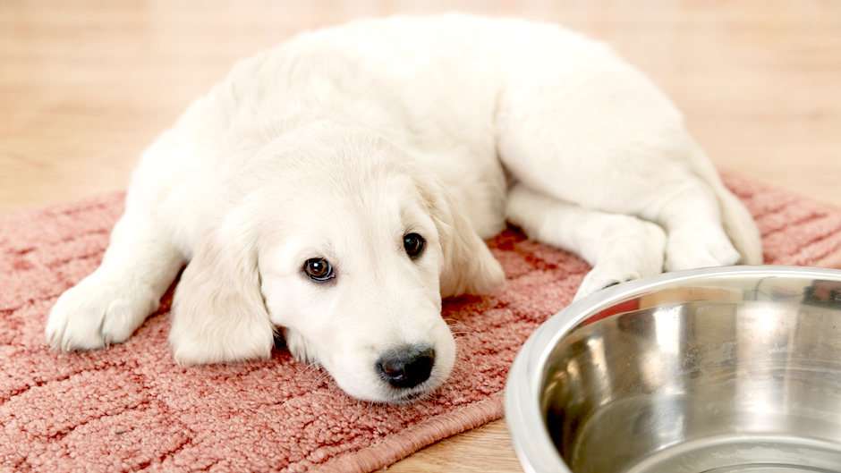 Finding Pet Friendly Apartments [Infographic]
