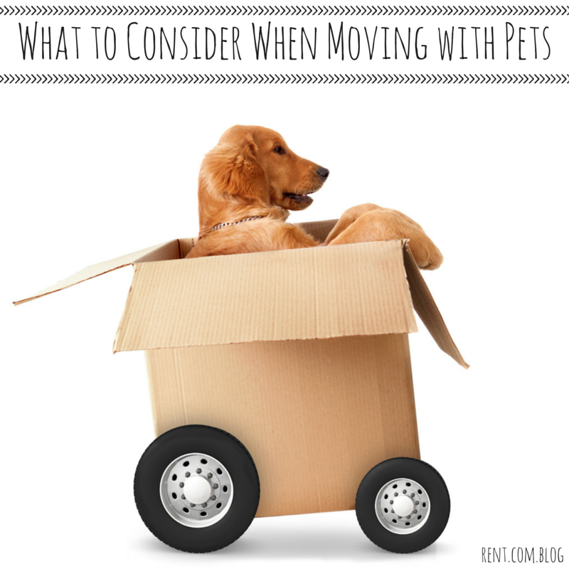 What to Consider When Moving with Pets copy