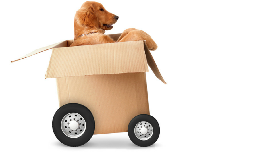 What to Consider When Moving with Pets