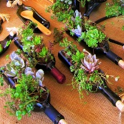 Wine Bottle Cratfs Planter_Thumbnail