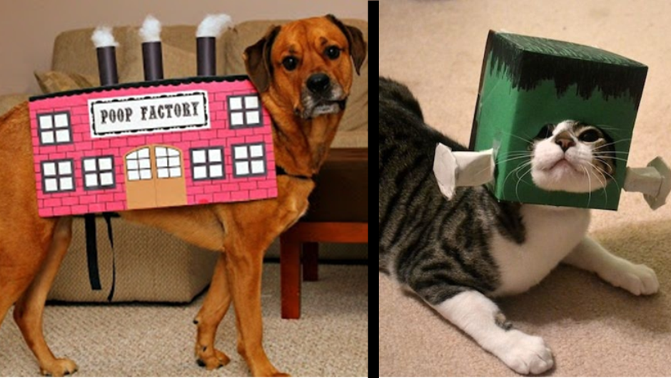 diy pet costumes - How To Make A Dog Halloween Costume