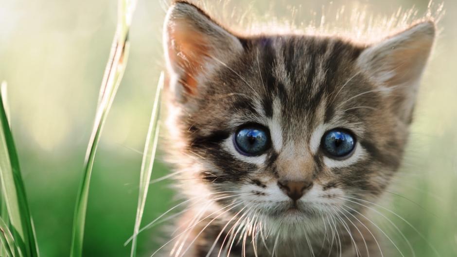 Decoding Common Cat Behavior Myths