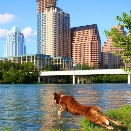 Dog-Friendly - Austin