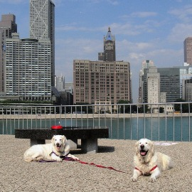 Dog-Friendly - Chicago