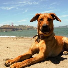 Dog-Friendly - San Francisco