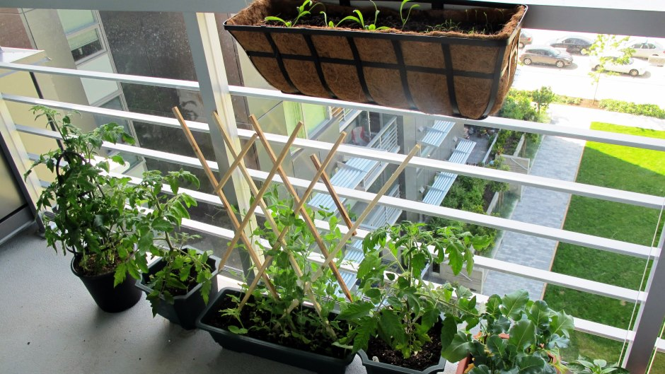 Apartment Gardening Grow Thanksgiving Ingredients Rentcom Blog