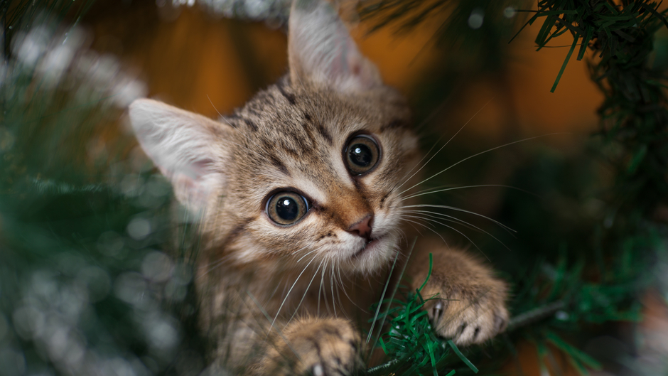 7 tips to cat proof your holiday decorations - Holiday Decorations