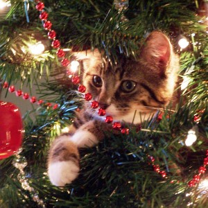 Holiday Card Ideas - Cat Playing in Christmas Tree