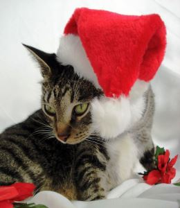 Holiday Card Ideas - Cat in Santa Hat