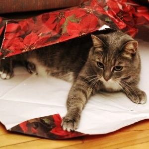 Holiday Card Ideas - Cat in Wrapping Paper