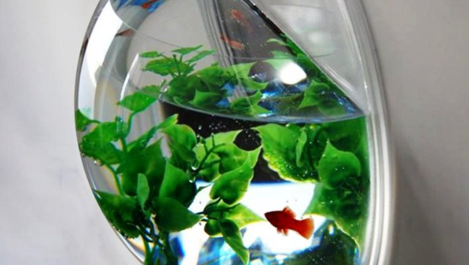 Creative fish tank ideas for your apartment blog for Low maintenance fish tank