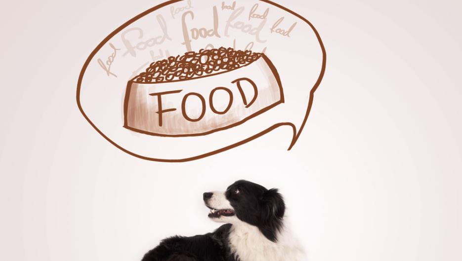 Dog Treat Recipe Ideas