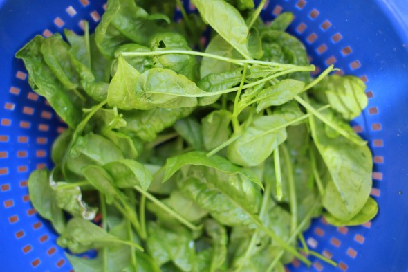 8 Edible Plants - Spinach
