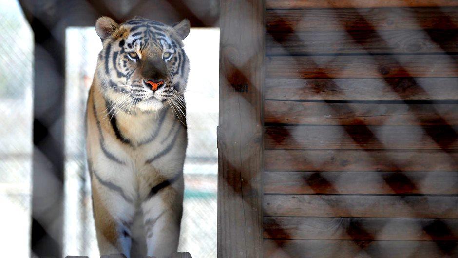 Summer Activities in Jacksonville - Catty Shack Ranch Wildlife Sanctuary