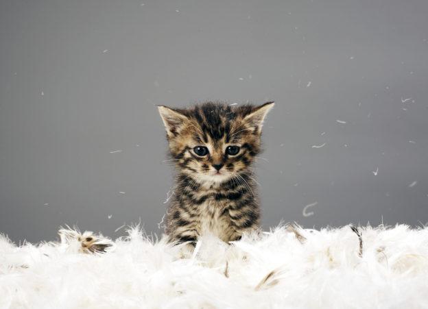 kitten for international cat day contest