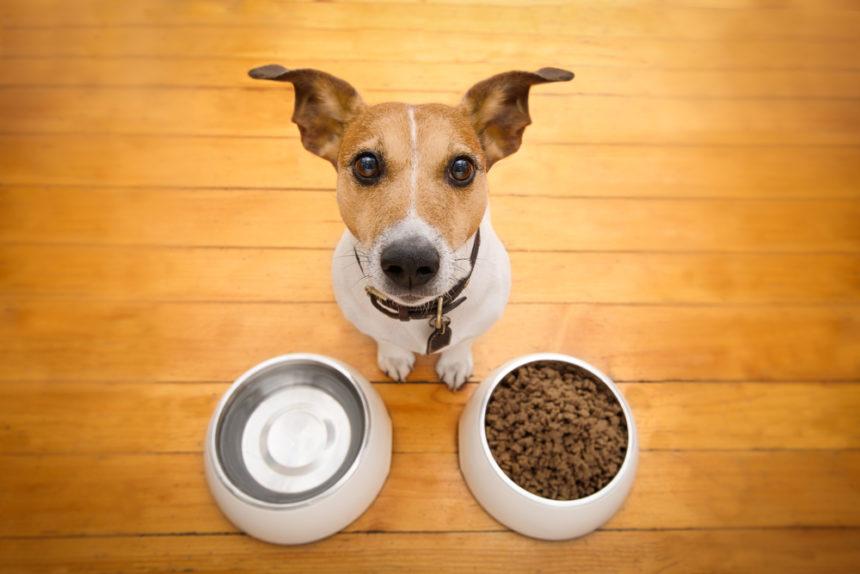 6 Pet Design Solutions