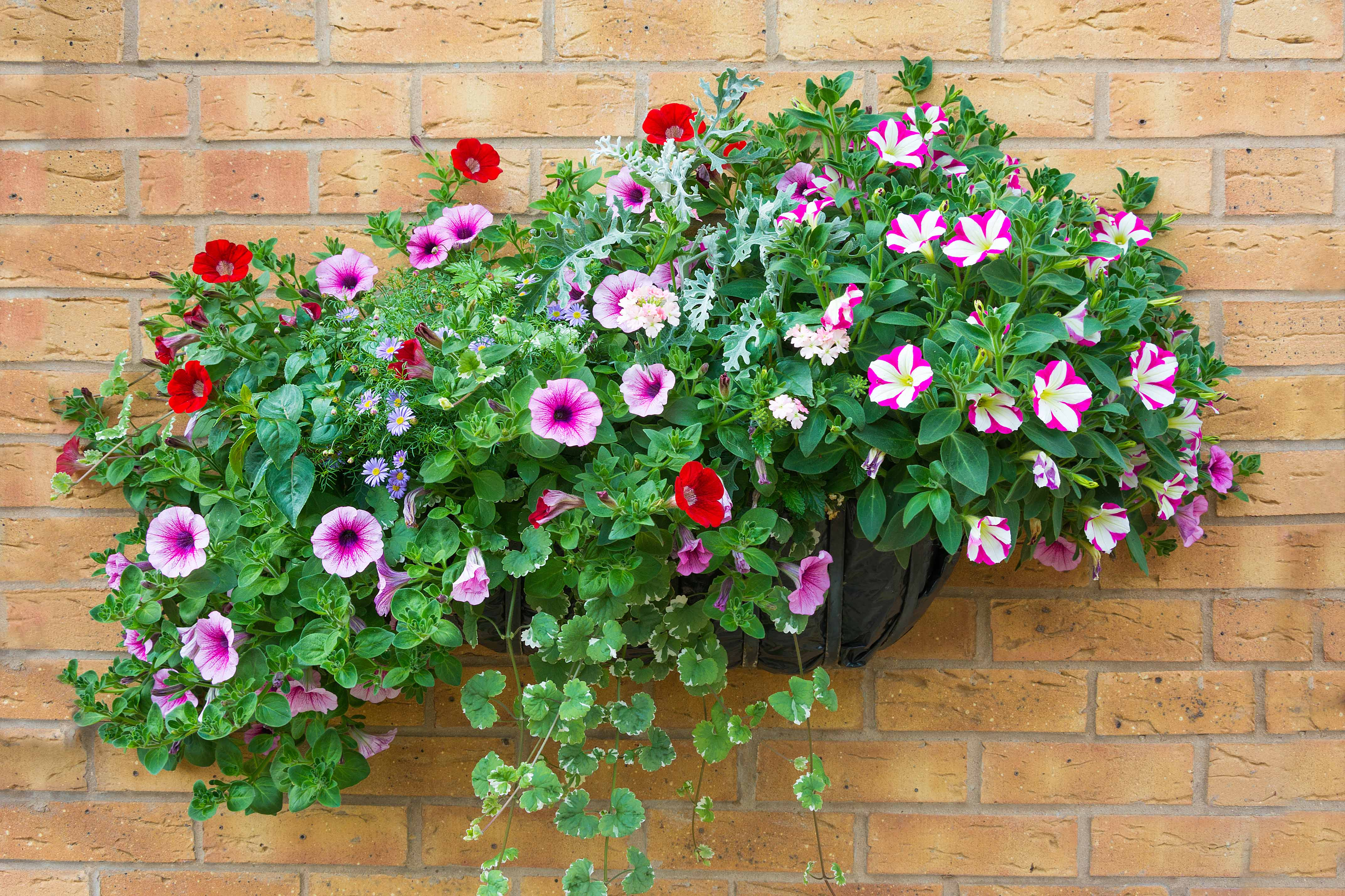 Four Plants for Low-Maintenance Container Gardens