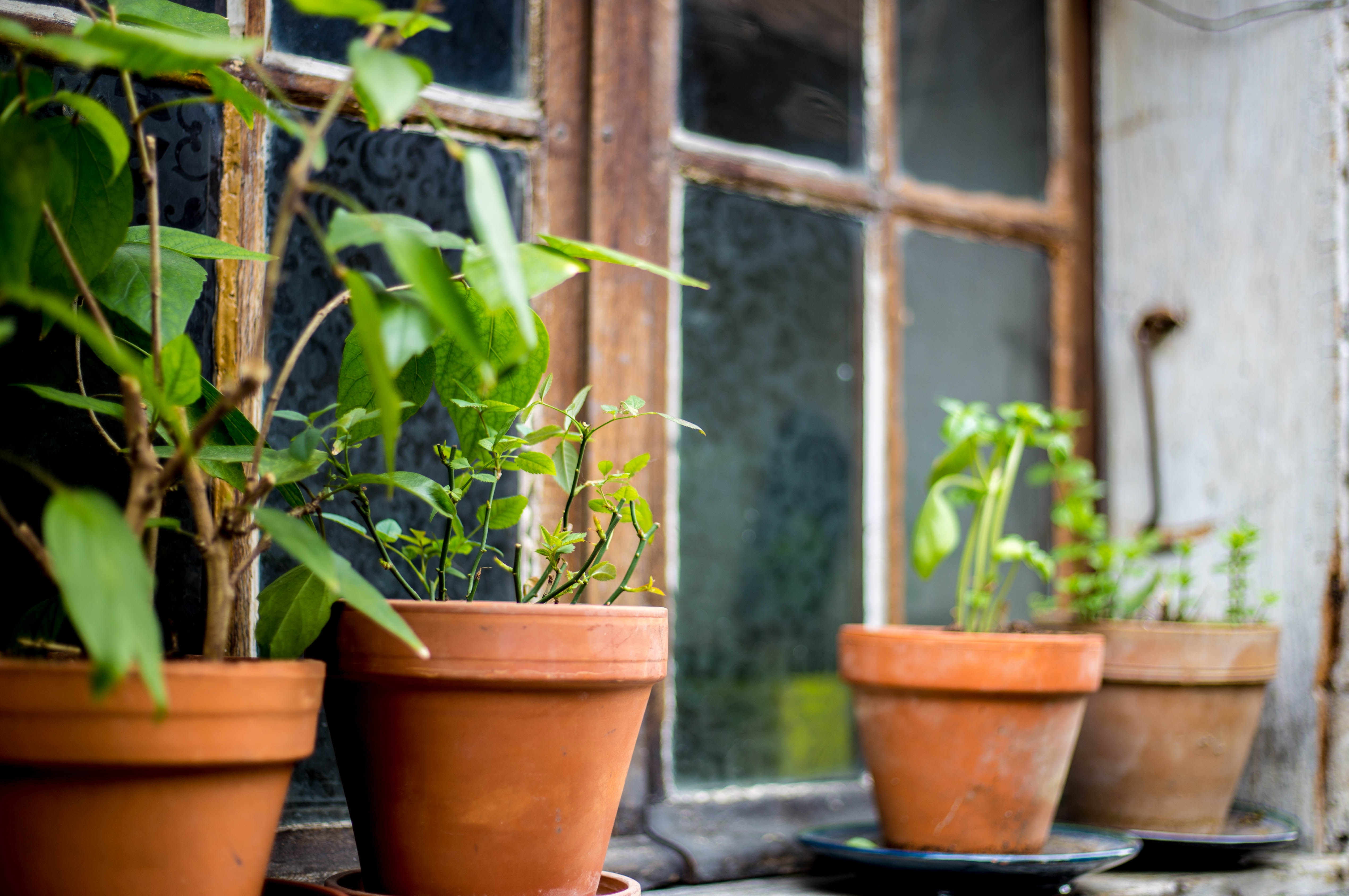 Watering Tips: Keep Your Plants Healthy In a Heat Wave