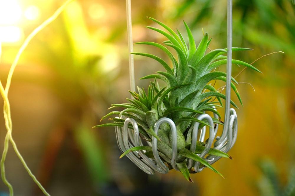 air plant decoration ideas