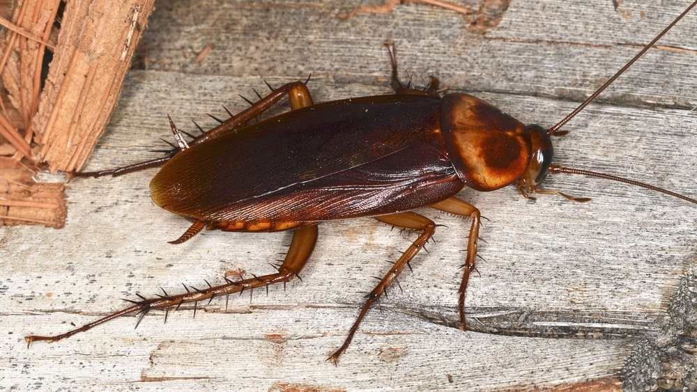 How to Get Rid of Cockroaches in your Apartment - Rent Blog