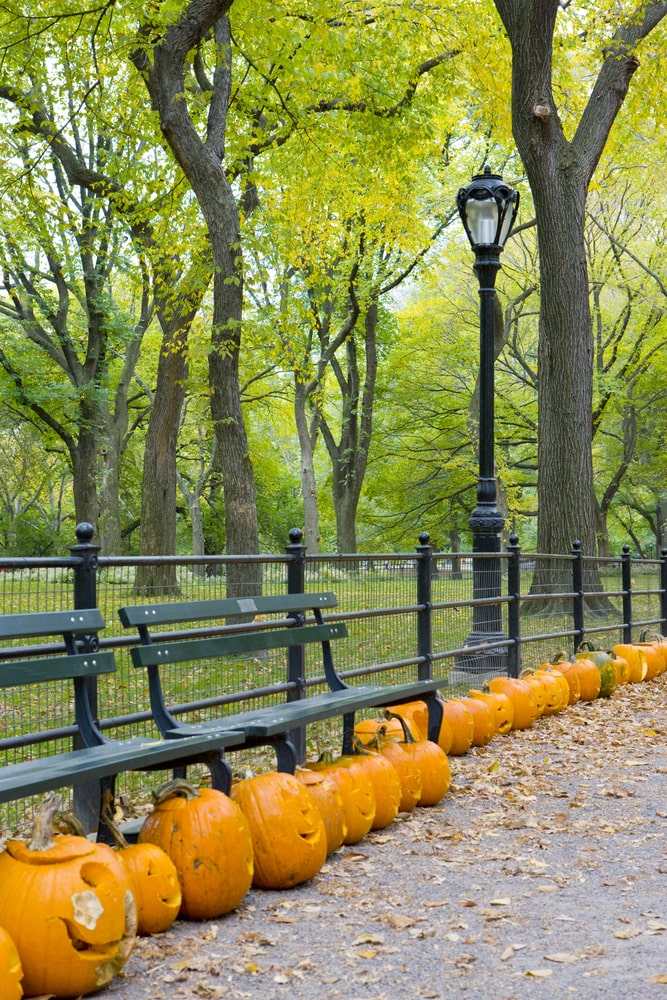 Central Park New York pumpkins