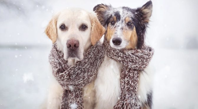 dogs wearing scarves