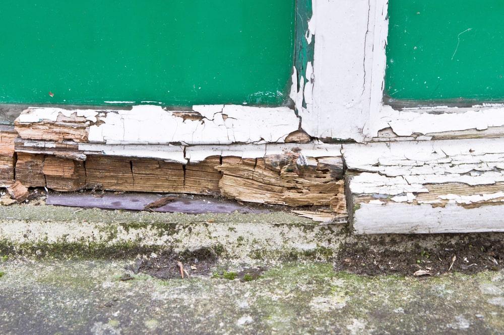 гниющая древесина