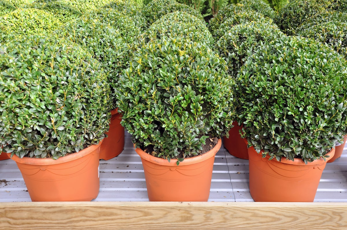 5 Winter Patio Plants That Are Easy To Maintain Rent Blog