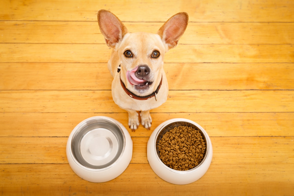dog food in bowls