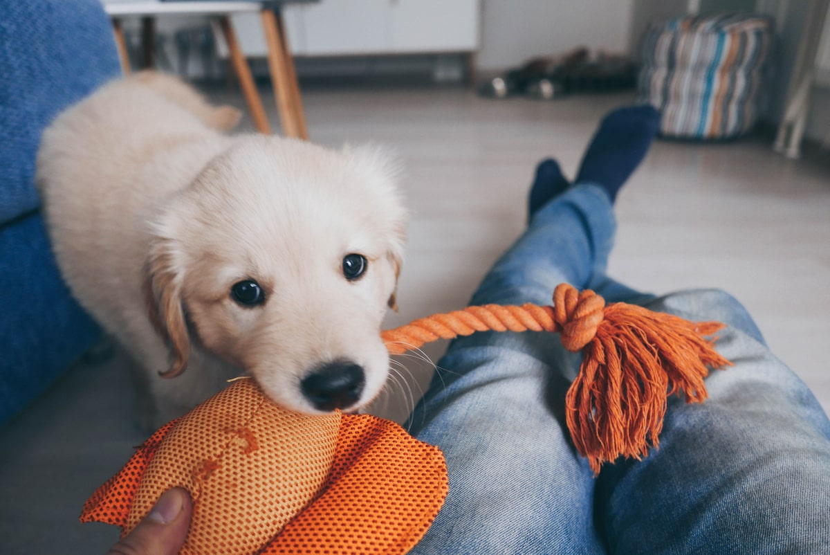 11 Essentials You Need When Bringing Home a New Puppy - Rent