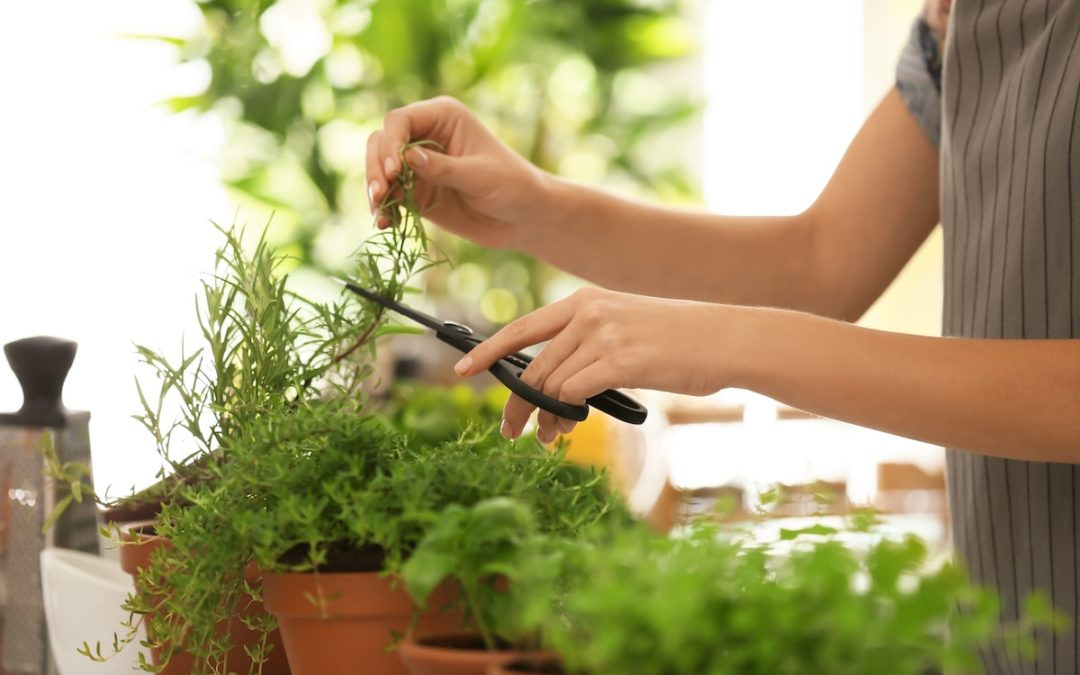Save Money by Growing These Cooking Herbs Indoors