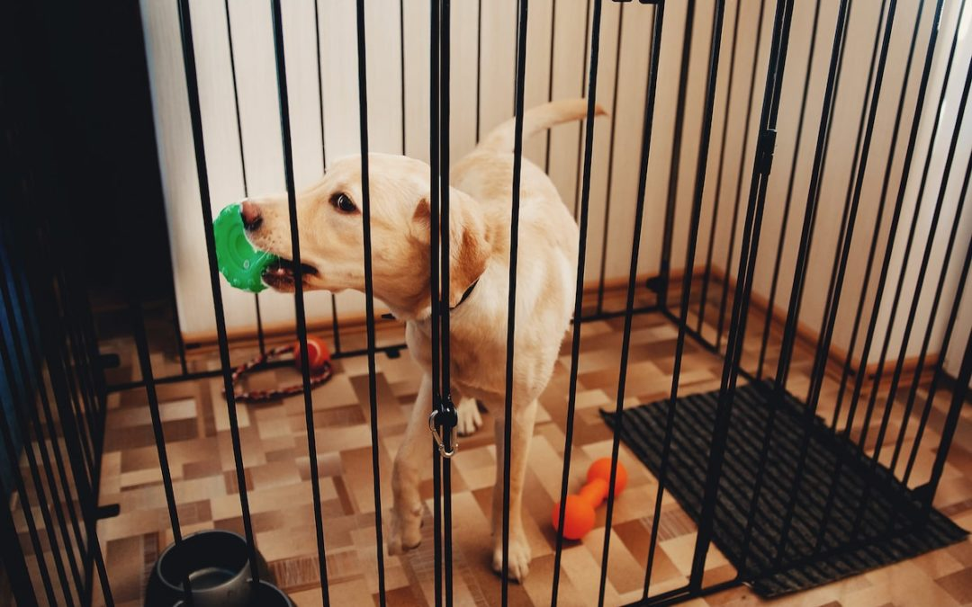 5 Pinterest Ideas to Ditch that Ugly Dog Crate