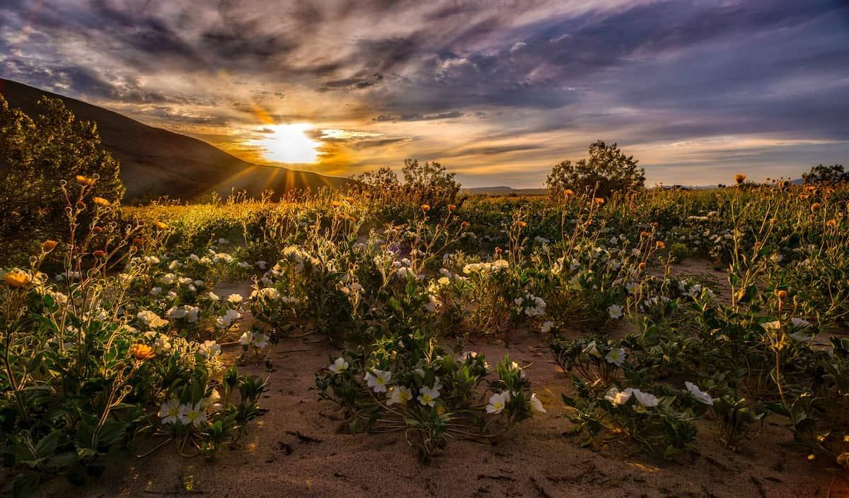 Anza-Borrego california