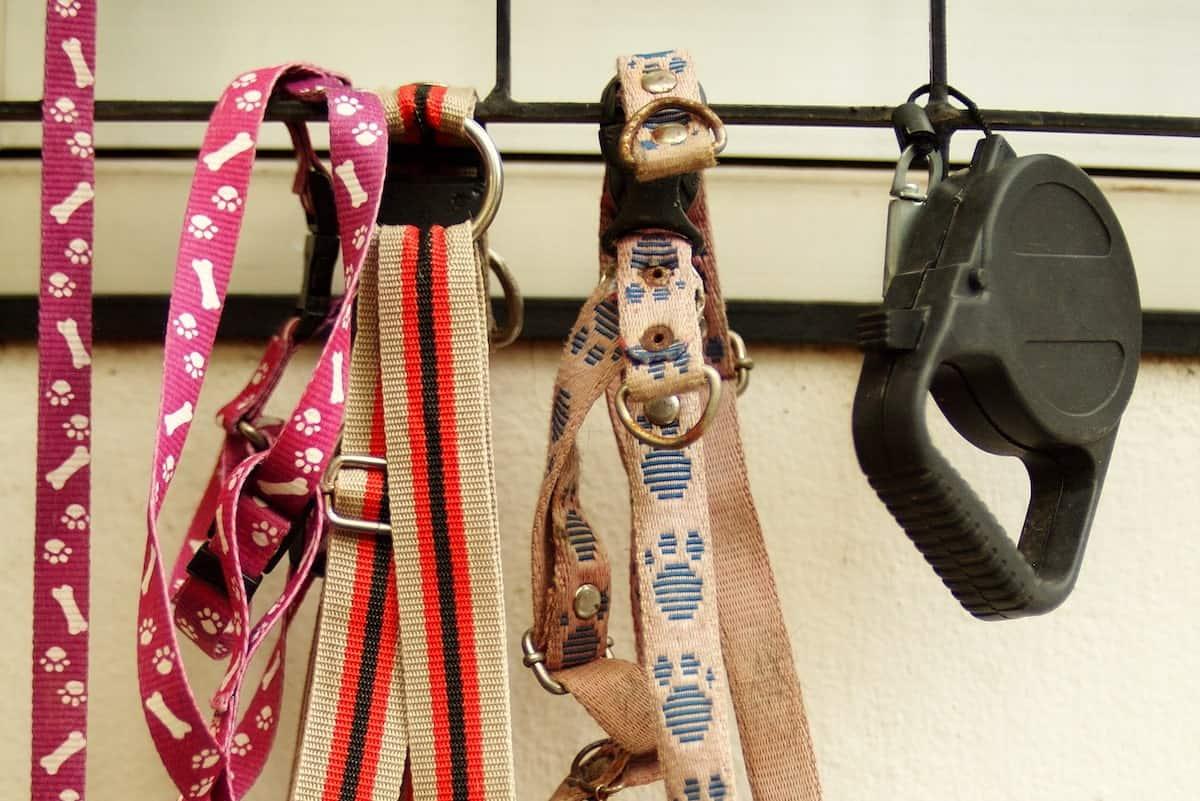 dog leashes on hooks