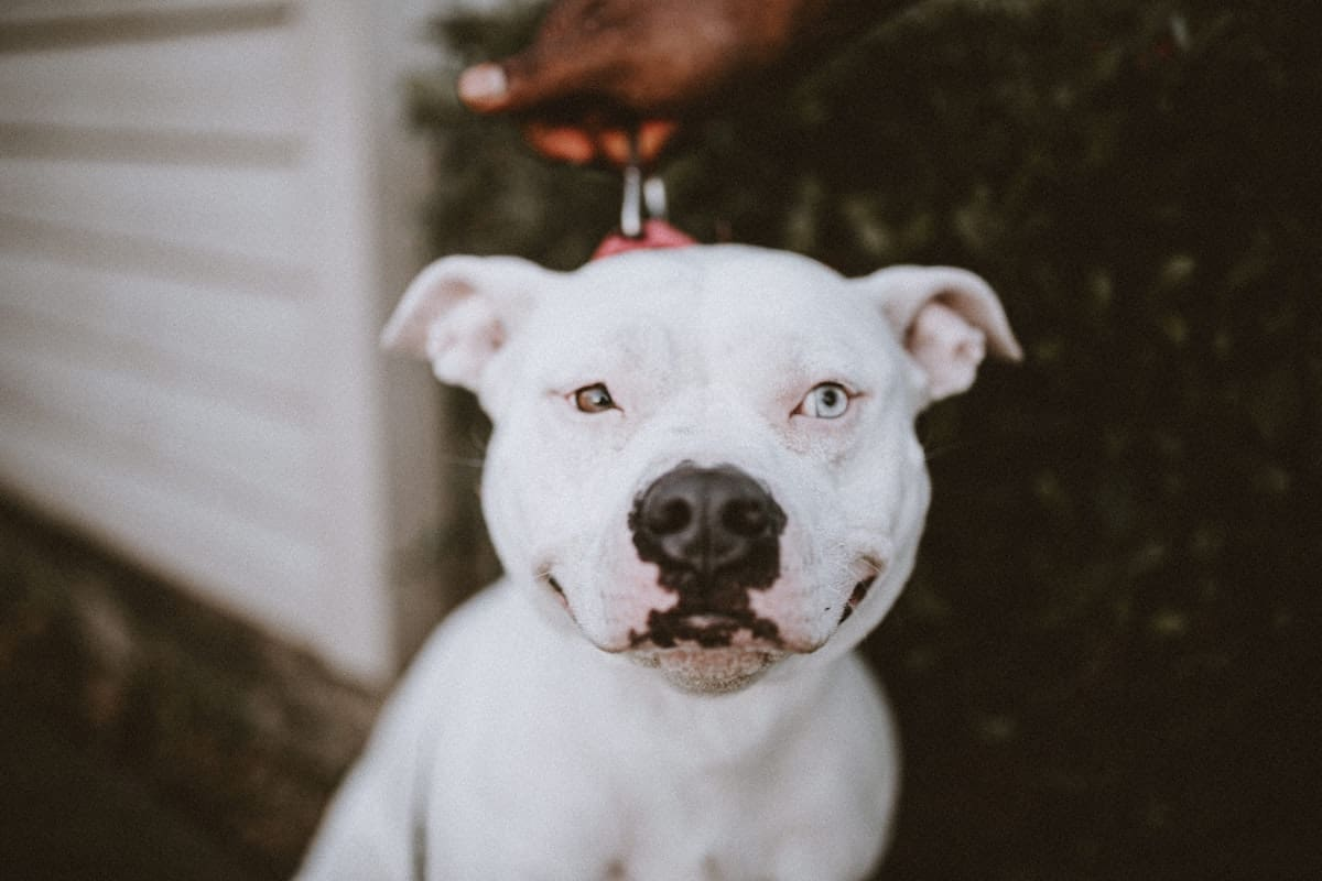 Breed Restrictions 101 Everything You