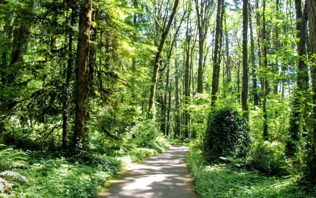 Forest covered bike path