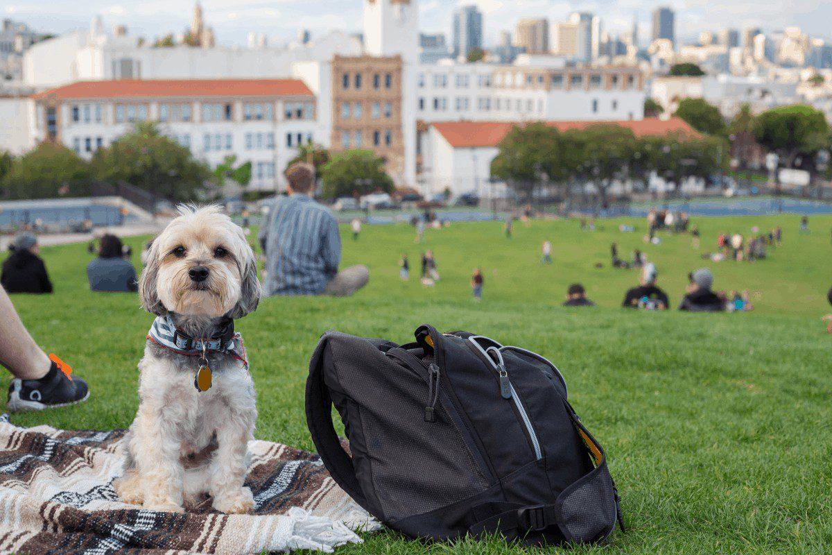 Dog in San Francisco at a park.