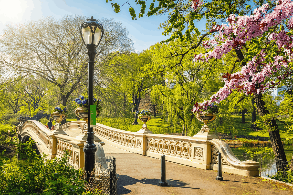 Central Park in NYC.